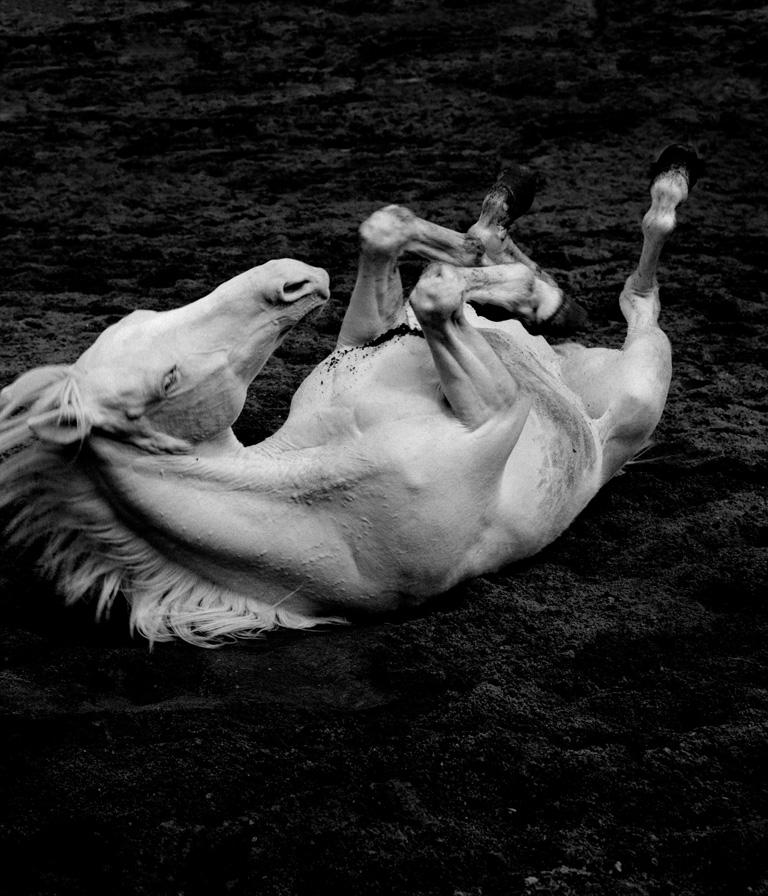 Albino paard