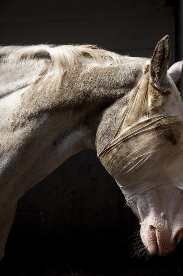 Cheyenne, Troyan horse