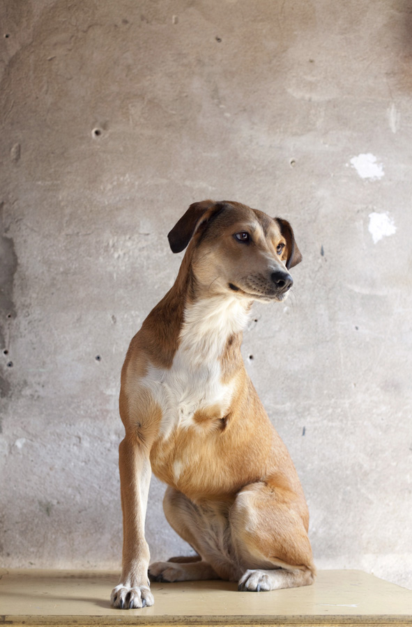 Karma, project gehandicapte dieren